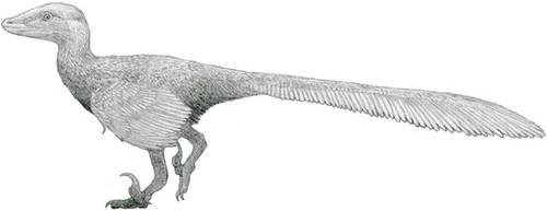 Velociraptor 2016 by Tomozaurus