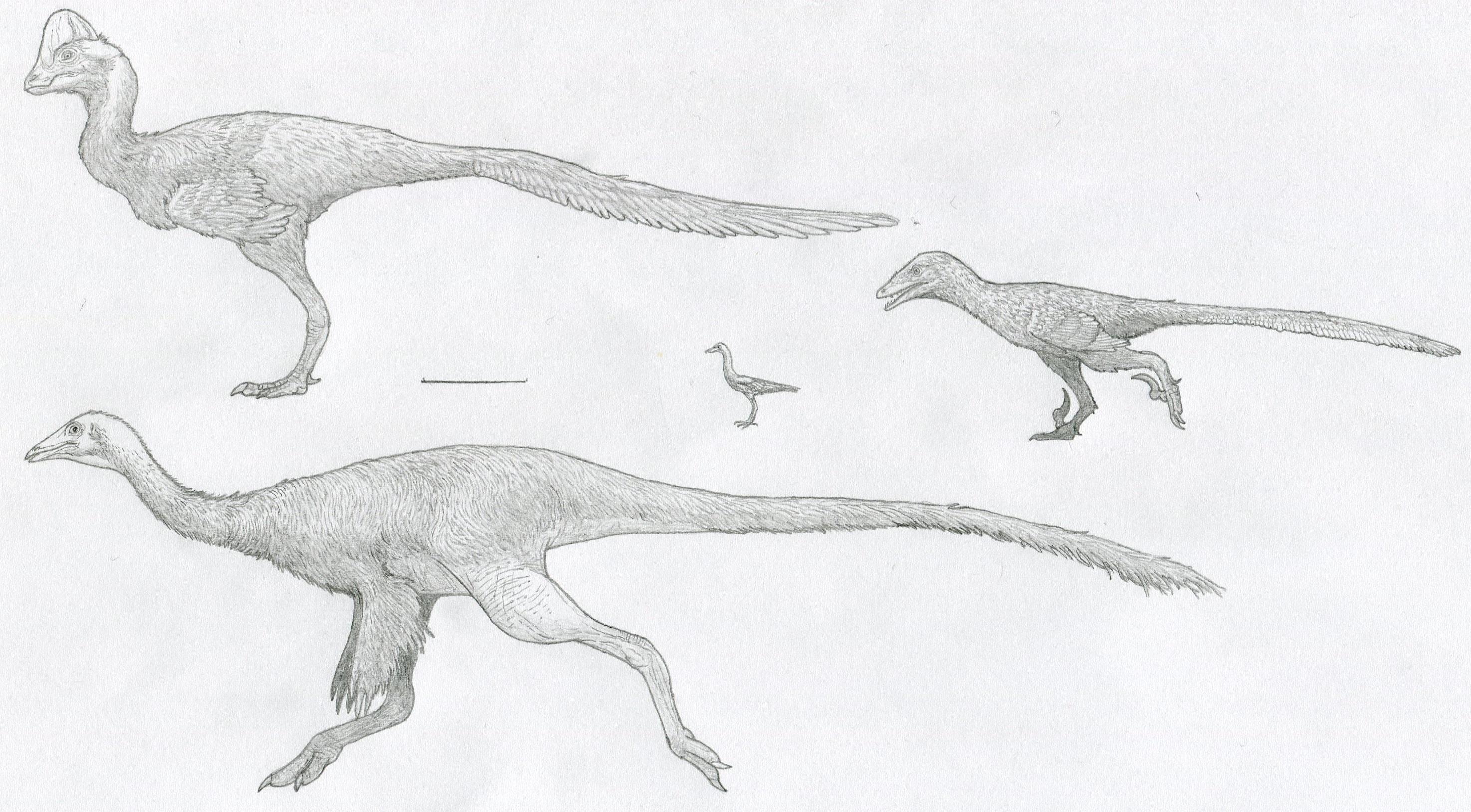 Hell Creek maniraptoriform sketch dump by Tomozaurus