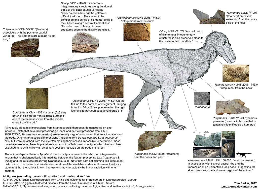 tiranosaurio - Tyrannosaurus rex - Página 3 Tyrannosauroid_integument_composite_by_tomozaurus-dbce4x1