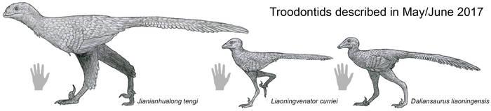 2017 Troodontids by Tomozaurus