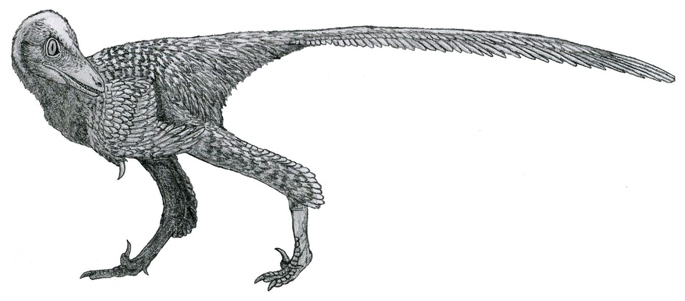 Almas ukhaa by Tomozaurus