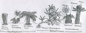 Sketch: Small plants of the morrison