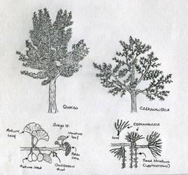Sketch: Ginkgoalean trees of the Morrison by Tomozaurus