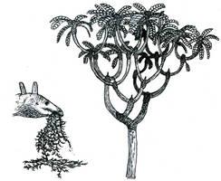 Jurassic vegetation sketches