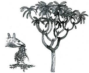 Jurassic vegetation sketches by Tomozaurus