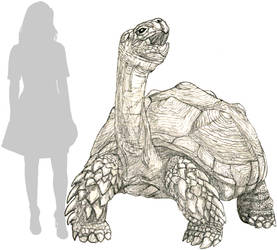 Skull Island Colossal Tortoise