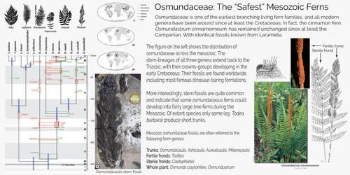 Ferns for the Mesozoic