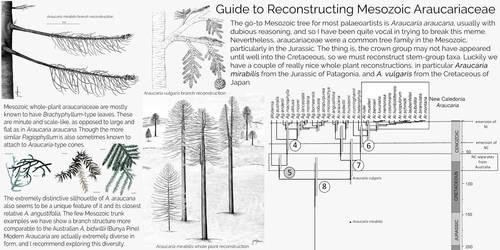 Araucaria infographic