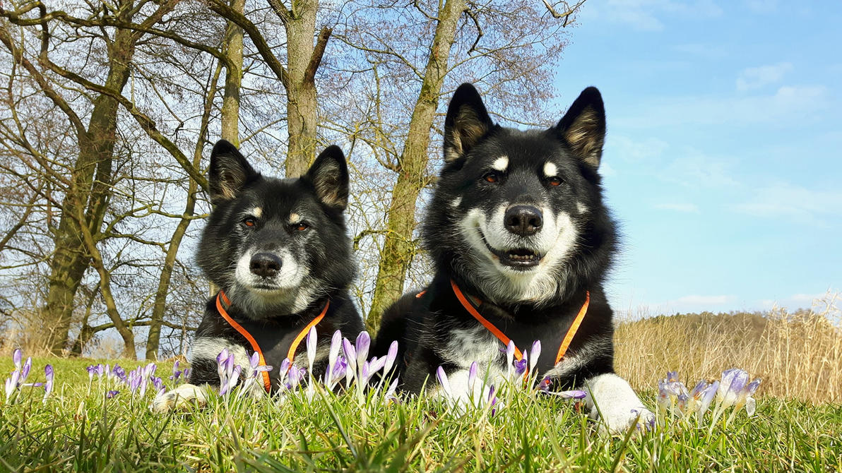 Laika and Gizmo are waiting for spring by Agura-Nata