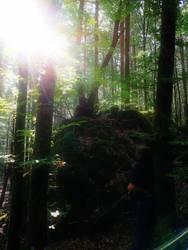 the secret forest by AguraNata