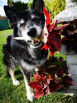 Autumn Greetings from Gizmo by AguraNata