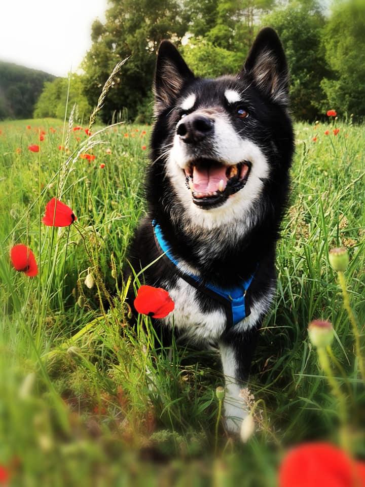 Happy Day in the poppy field