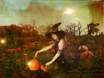 Witch Pumpkin Fields by cordially-yours