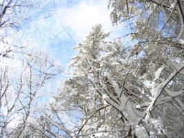 Icy Trees by dizzyflower28