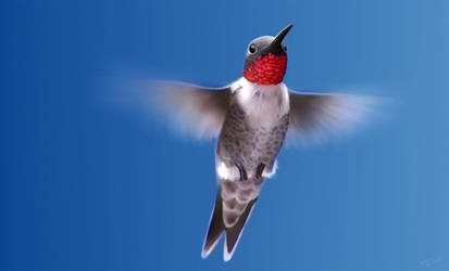 Ruby Throated Hummingbird Study