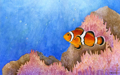 The Clownfish Experiment