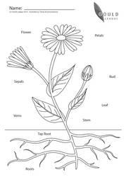 Flower Morphology