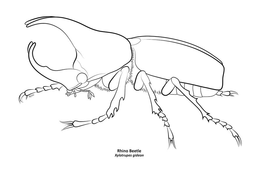 rhinoceros beetle coloring pages - photo#1