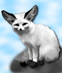 Flurry - siberian Fennec Fox