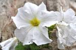 Flora by pygmalion22