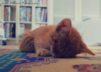 Teddy Is Asleep Now by jack2KIA