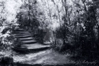Mystical Forest Infrared Photography