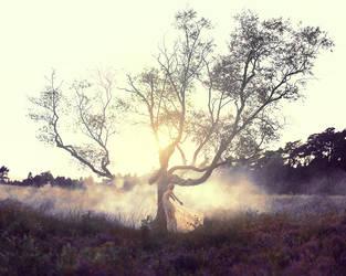 Crack Of Dawn by Sturmideenkind