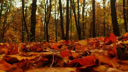 Forest of October I