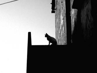Cat 00 by IzumiToyama