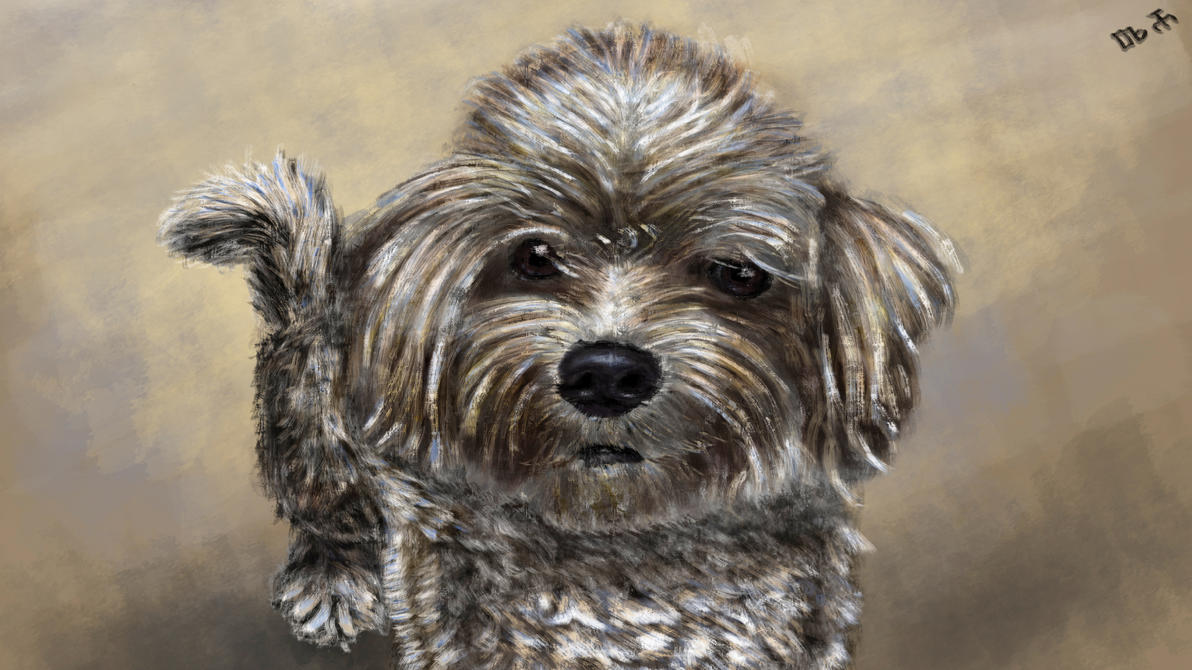 Dog painting, bichon (Axi) by DragosAndrei