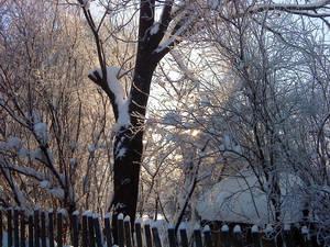 Rus-Winter Photo 10