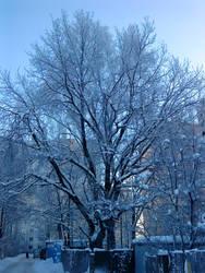 Rus-Winter Photo 11