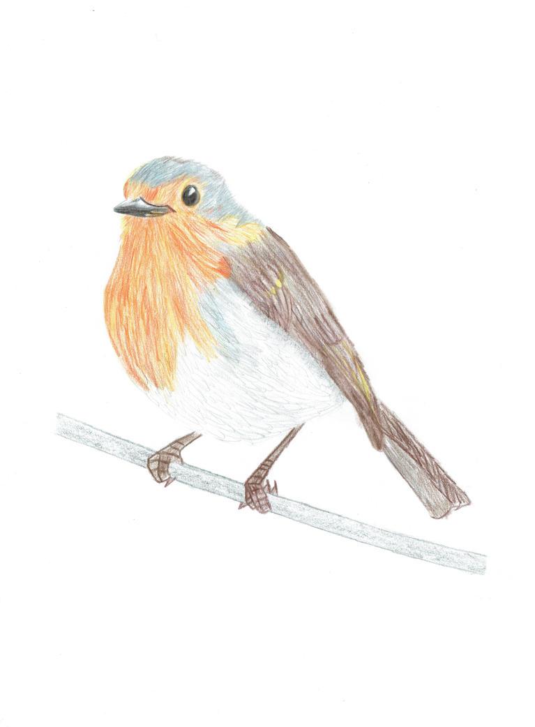 Robin by tuna-riri