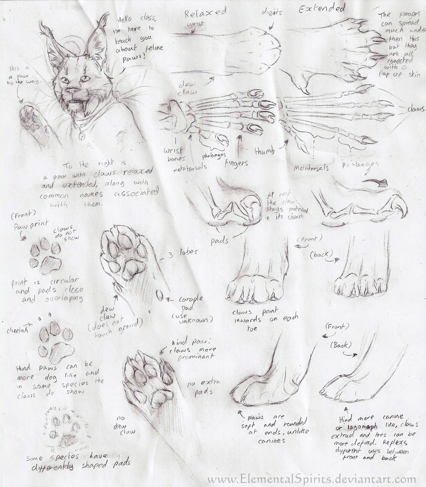 Feline Paw Tutorial by ElementalSpirits