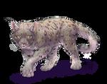 New Lauryll cat
