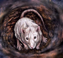 Little Rat by ElementalSpirits