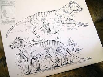 Thylaciene Doodles