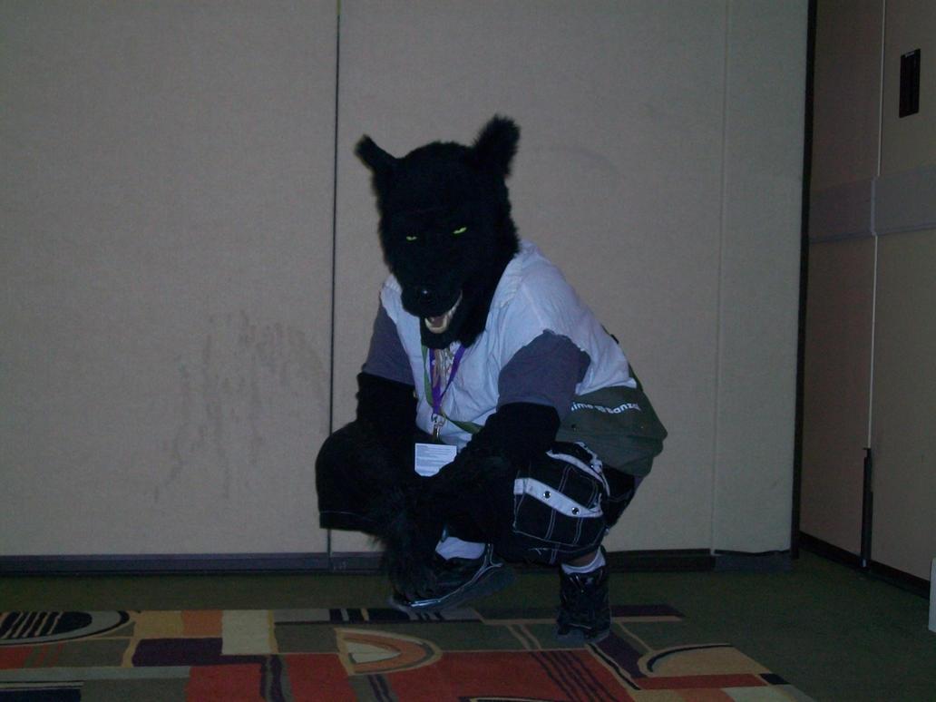 Black wolf furry - photo#4