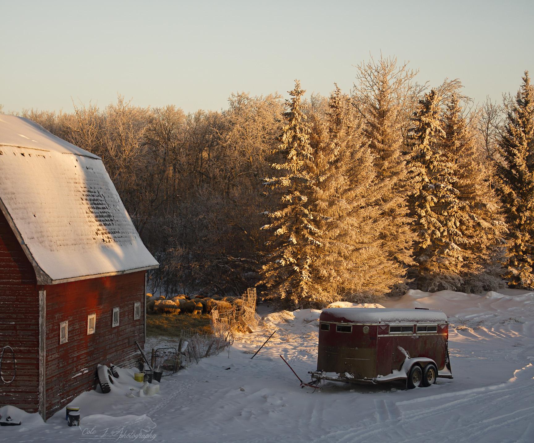 December Morning by ColeJA