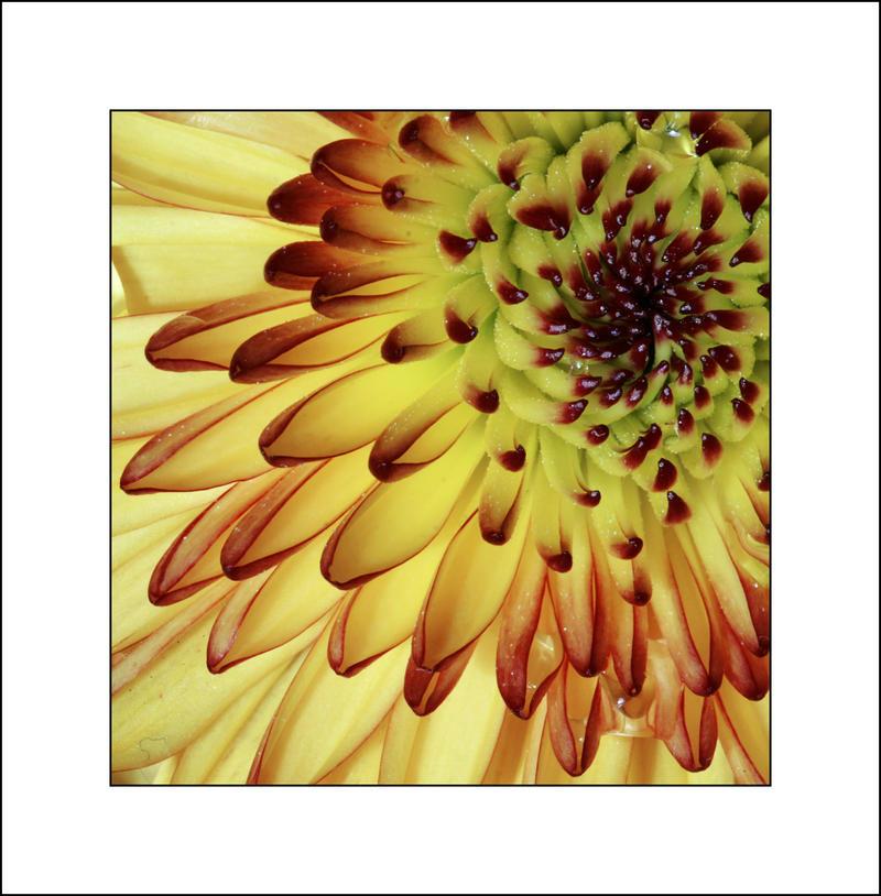 Pale Flower by Eruwyn
