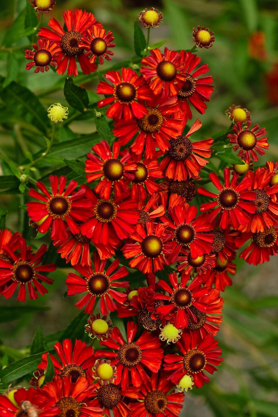 Gear Flowers by Eruwyn