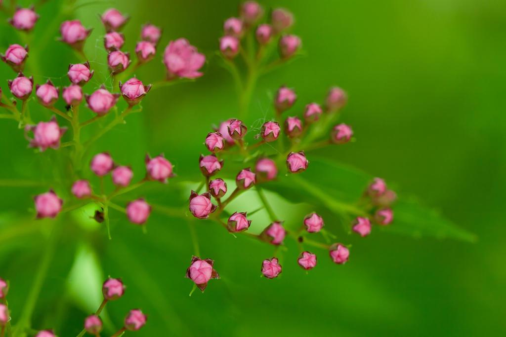 Bright Pink by Eruwyn