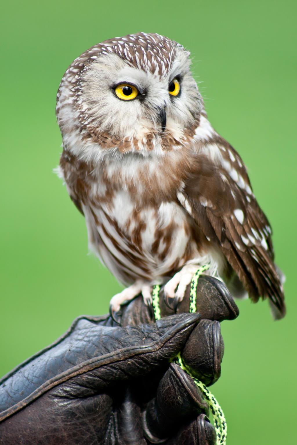Owl-2 by Eruwyn