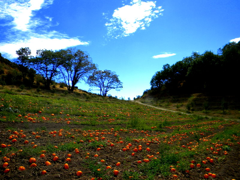 Pumpkins of Early Fall by deep-south-mele
