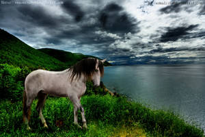 Across The Sea by PintabianDreamer1222