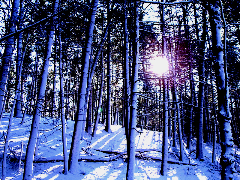Winter Scene 1 by Hoodwinkstar