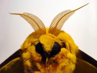 Imperial Moth 4 by TrekkieTechie