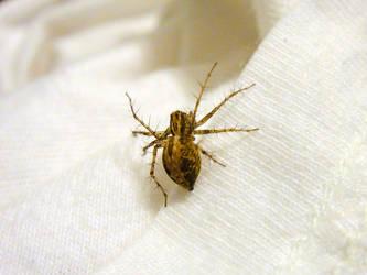 Garden Orb Weaver Spider by TrekkieTechie