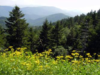 Richland Balsam Mountain by TrekkieTechie