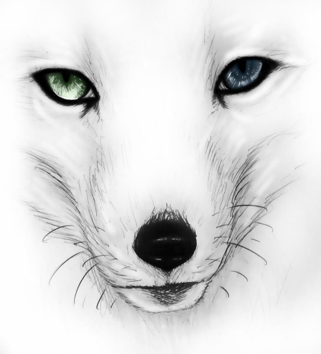 Arctic Fox By R0xx0rzzz On Deviantart
